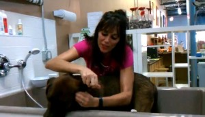 Jenn_Fadal_Pack_Mom_How_to_Wash_a_Dogs_Ears