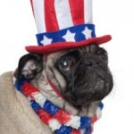 Furries and Fireworks- Fourth of July Pet Safety
