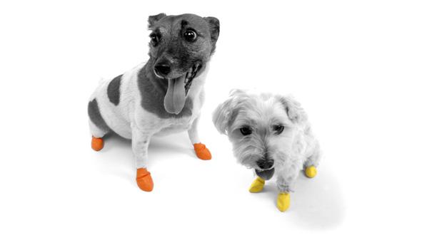 Best Way To Moisturize A Dog S Paw