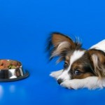 Finicky Fido?  How to Feed a Picky Pet