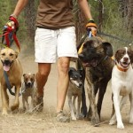 Give Your Dog a New Leash on Life…or at Least a New Leash!