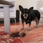 Is Your Dog Fat?  How to Get Your Dog to Lose Weight by Jenn Fadal