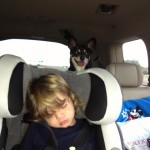 Pack Mom Daily Bite:  How to Make a Puppy Feel Secure in a Car