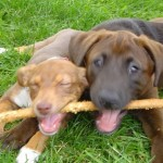 Pet Peeves #1- The Chewing Habits of Dogs