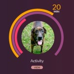 My Dog's Voyce- A Health Monitor for Your Dog